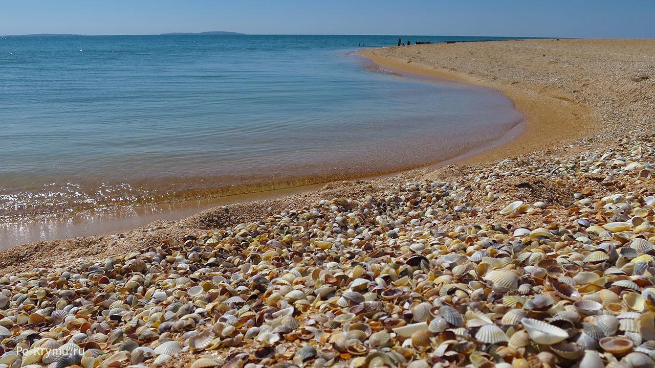 Ракушечный пляж в Новоотрадном