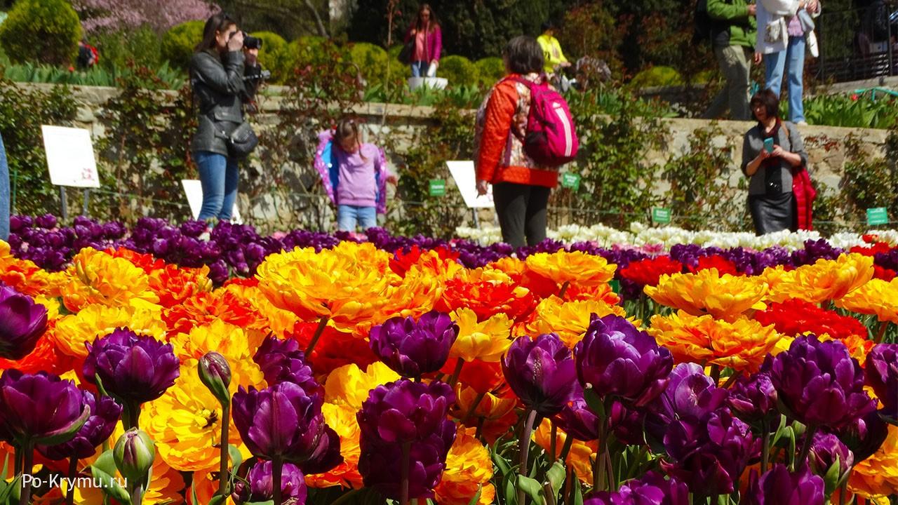 Парад тюльпанов в Никитском ботаническом саду.