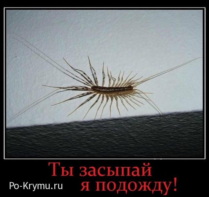 Все многоножки Крыма