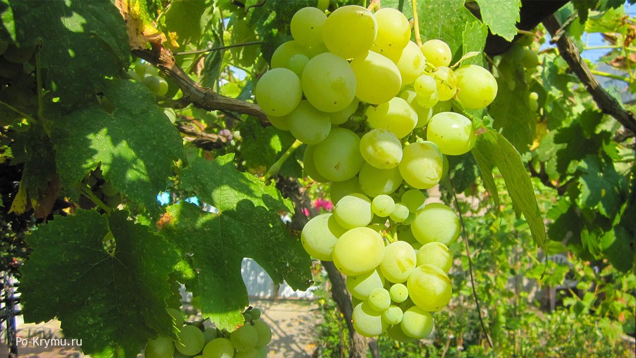 Вкусный крымский виноград.