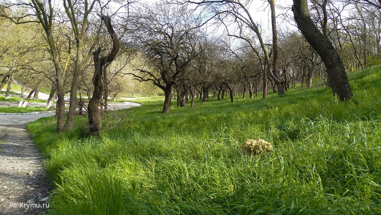 деревья-на-зеленом-ковре