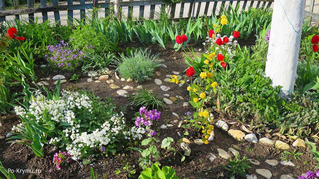 многоцветье-в-полисаднике