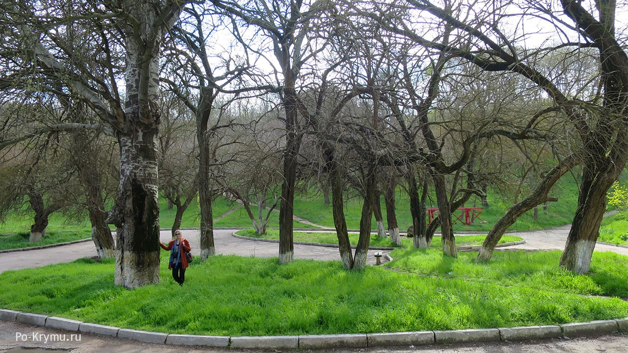 старый-тополь-в-парке