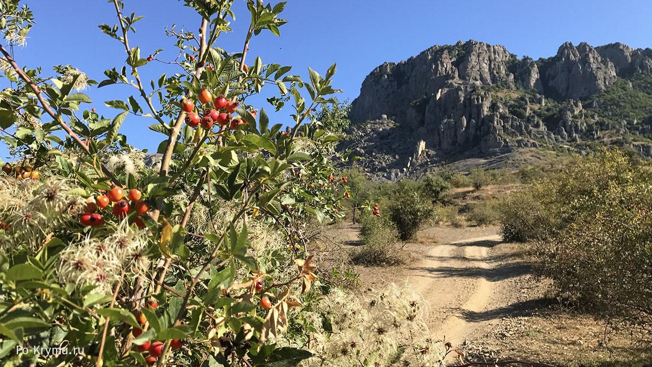 Дорога к Демерджи - заросли шиповника и ежевикию