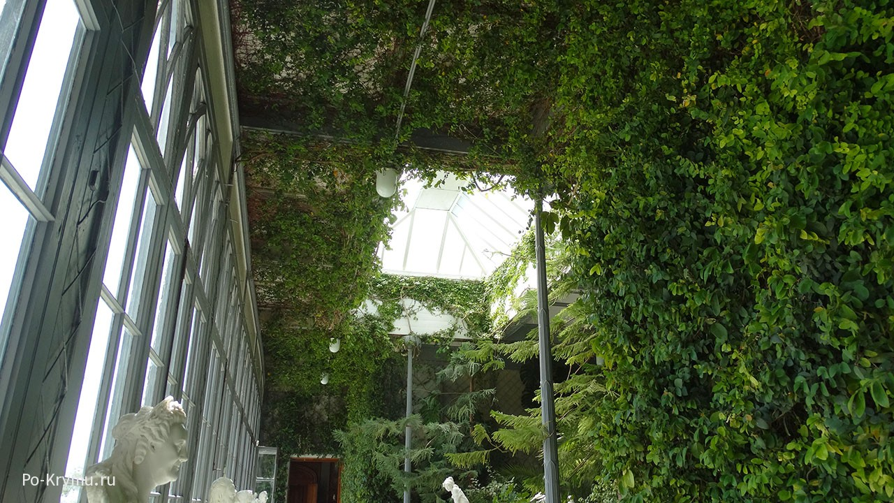 Вьющиеся растения тянутся к стеклянному потолку.