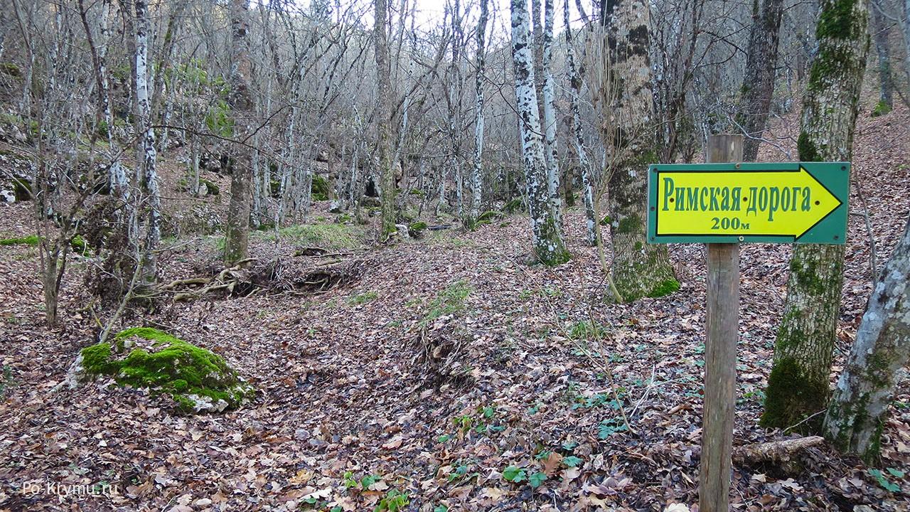 Урочище Узунджи участок реликтового Карадагского леса