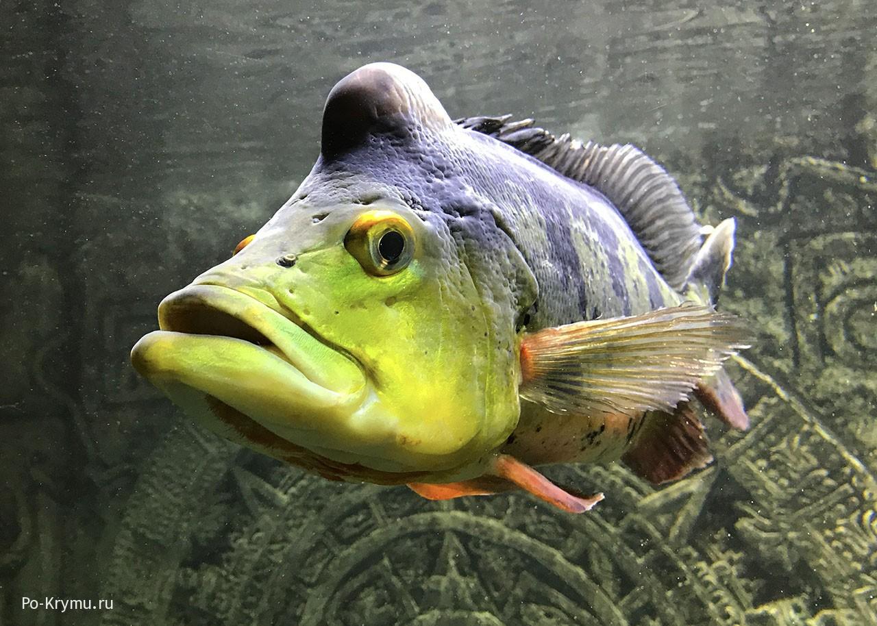 Севастопольский аквариум.