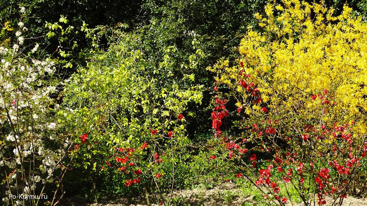 Что цветет в Крыму в апреле в Никитском ботаническом саду.
