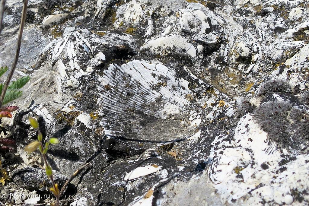 Палеонтологические находки в Крыму.