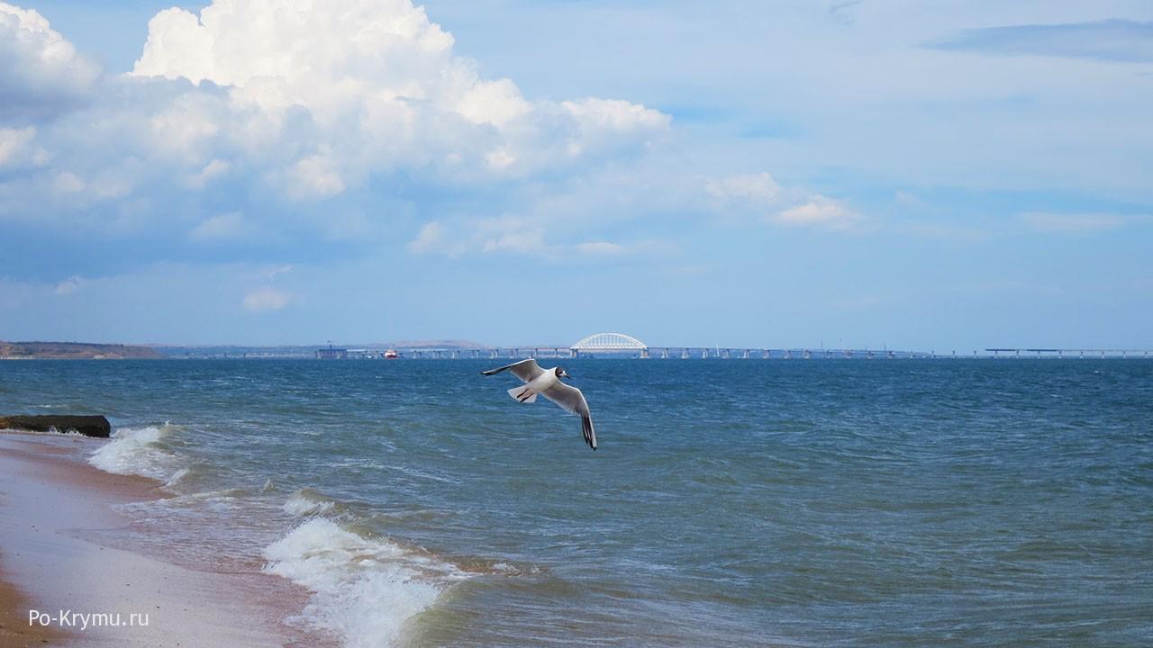 Чайка, Керченский пролив.