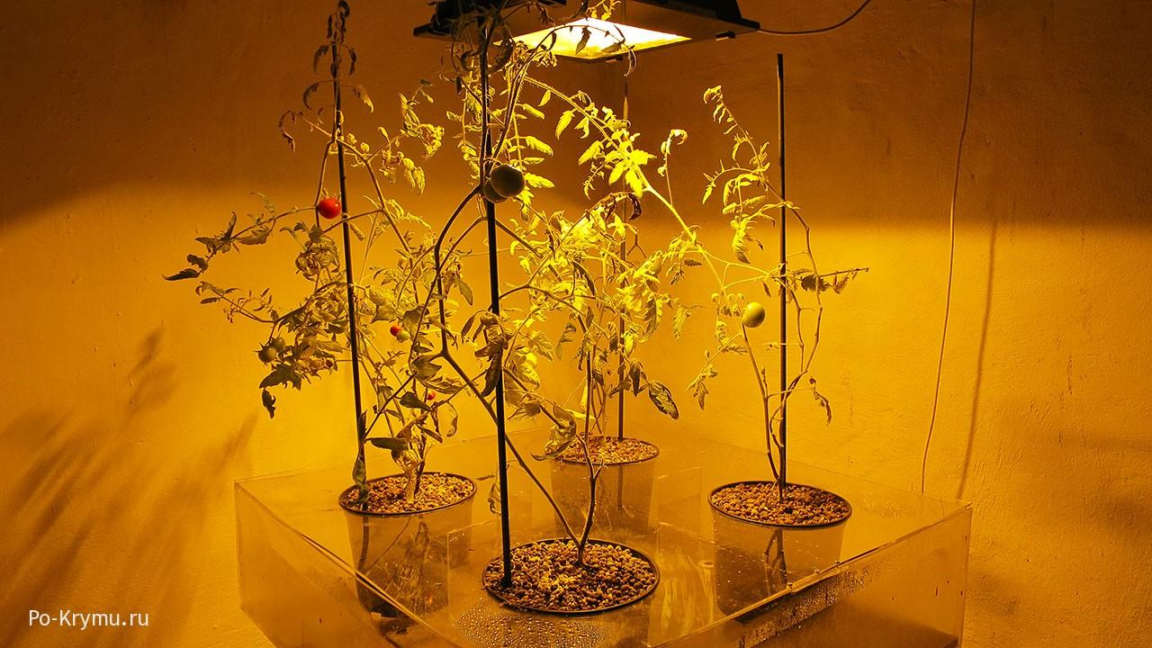 Выращивание растений без дневного света.