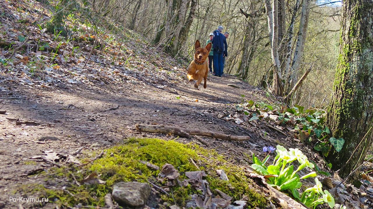Горный крымский лес, окрестности Бахчисарая.