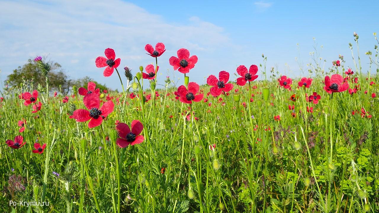 Что цветет в Крыму в июне.