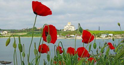 Что цветет в мае в Крыму