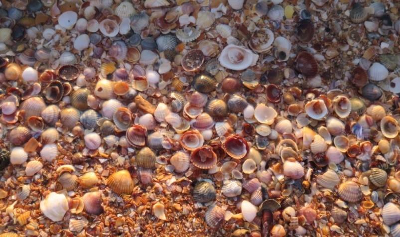 Разноцветные ракушки на Азовском море