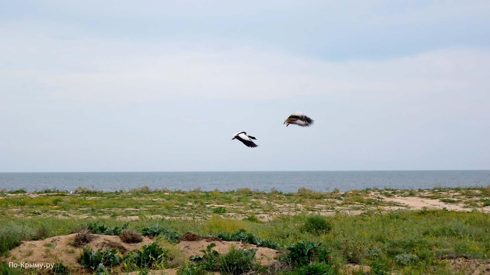Азовское море, Арабатская стрелка, дикий пляж