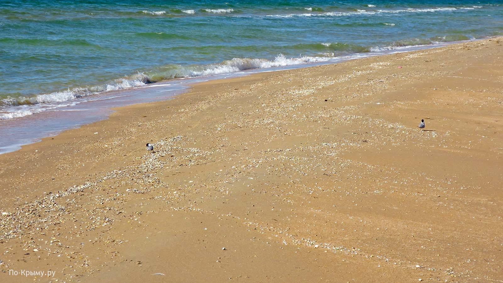 Крымское побережье Азовского моря. Песчаный пляж Новоотрадного