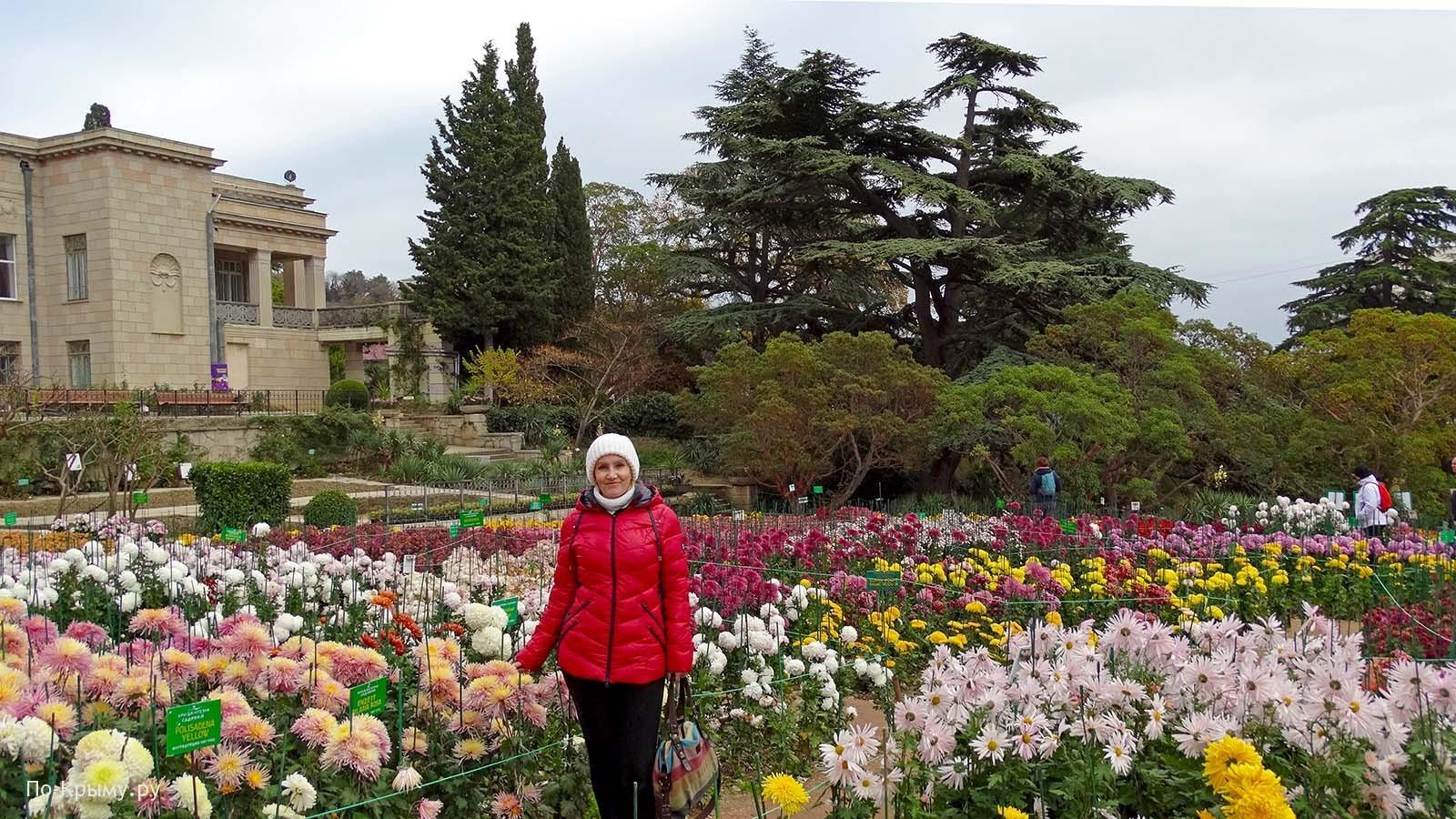 Бал хризантем в Крыму