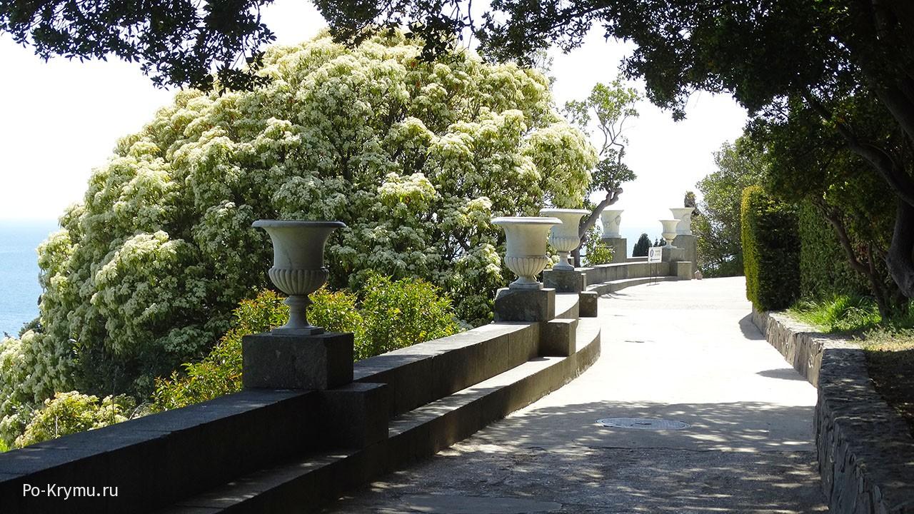 Фотографии ухоженный дорожек Алупкинского парка