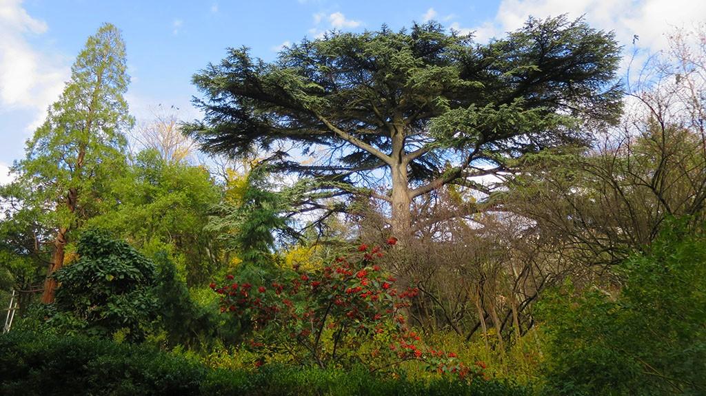 v-nikitskom-botanicheskom-sadu