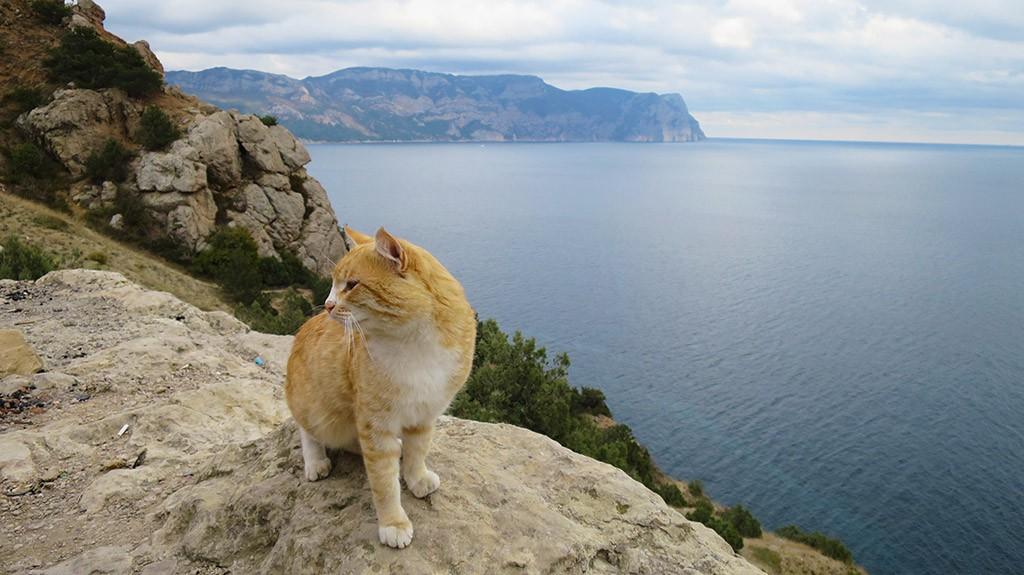 Рыжий морской кот.