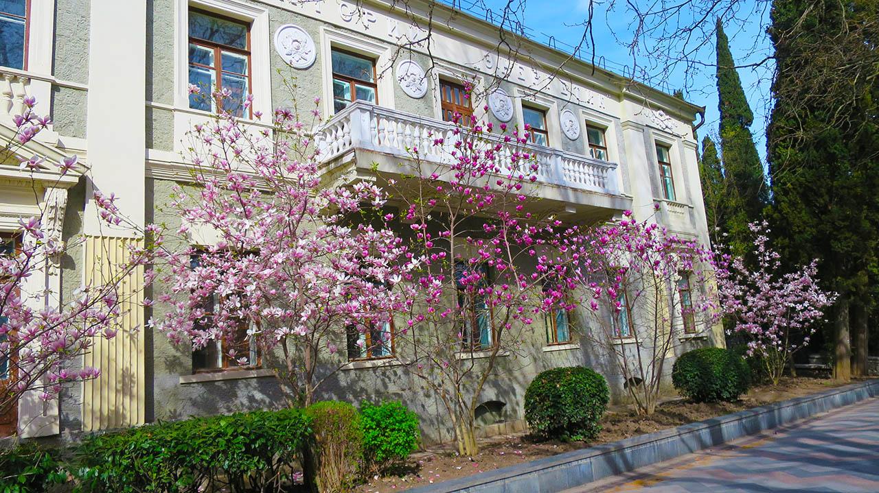 Зачем ехать в Крым - увидеть цветение магнолии