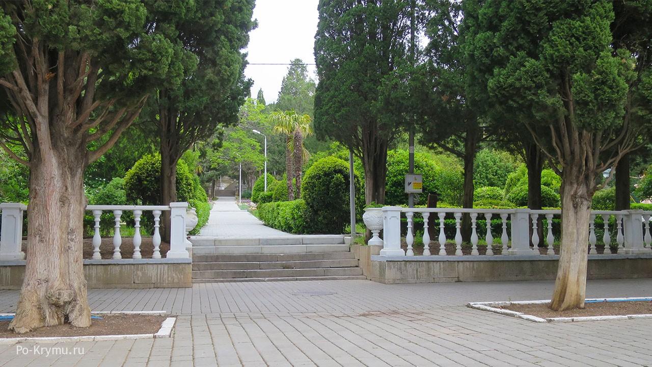 Пальмы в симеизском парке.