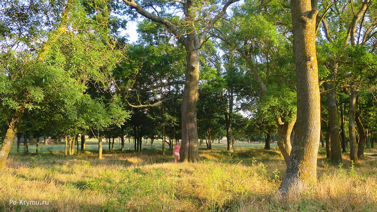 Старые деревья забытого парка графа Воронцова на западе Крыма