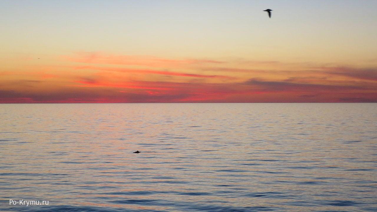 Дельфины в бухте Абрамова