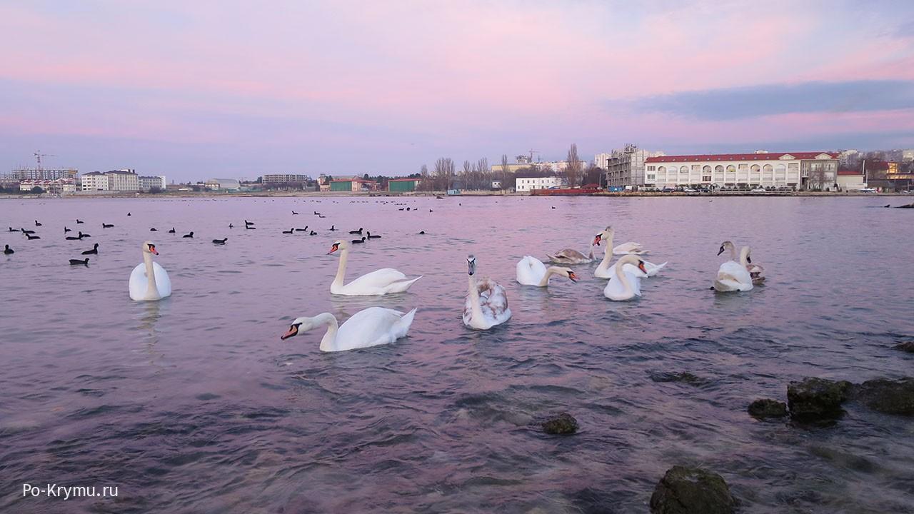 Розовое море в бухте Омега