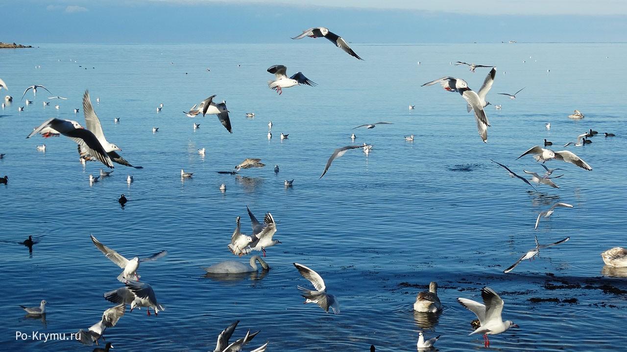 Почему Черное море изменило цвет?