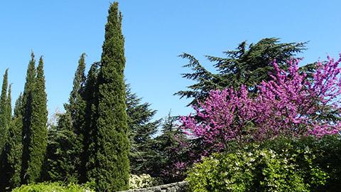 Интересные растения Крыма, упоминаемые в Библии