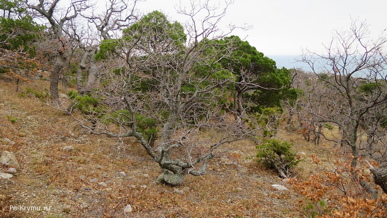 Деревья как ветвистые стражи