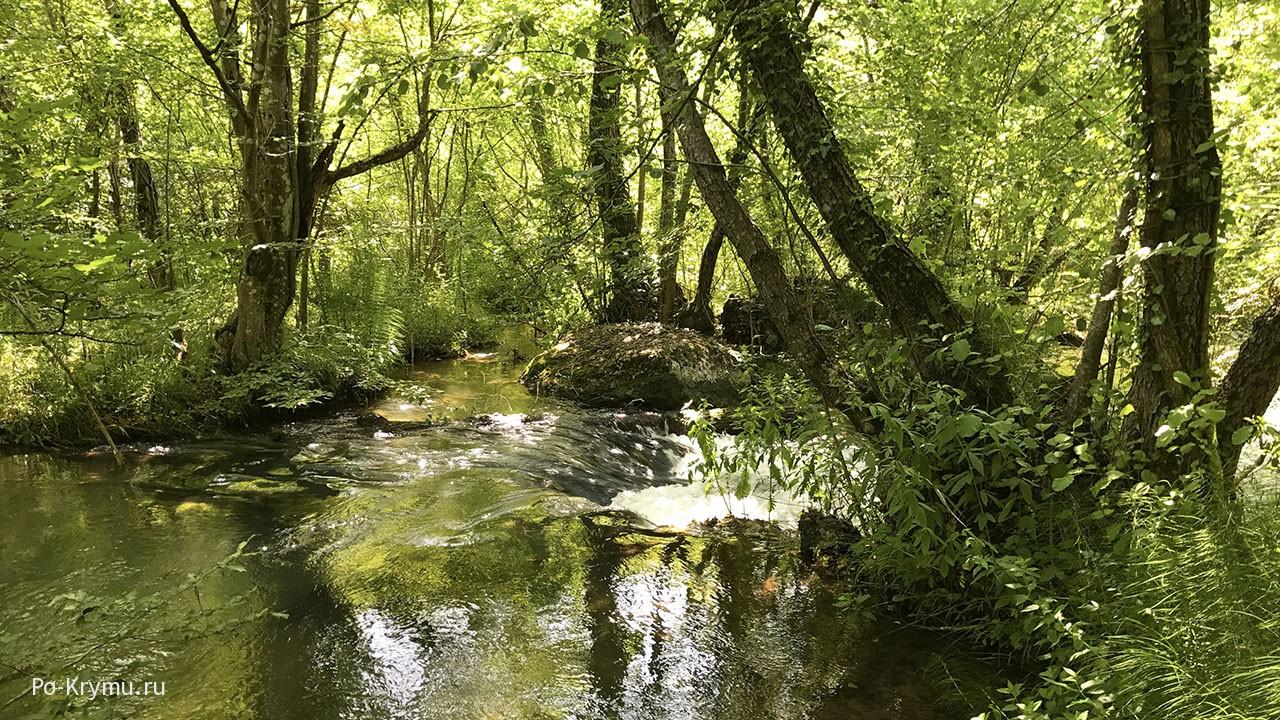 Волшебный крымский лес.