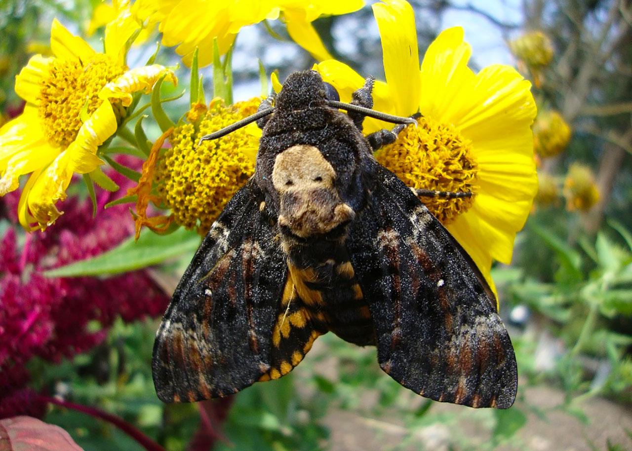Самые большие насекомые полуострова Крым