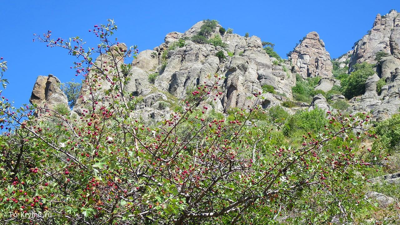 Гора Демерджи, Алушта.