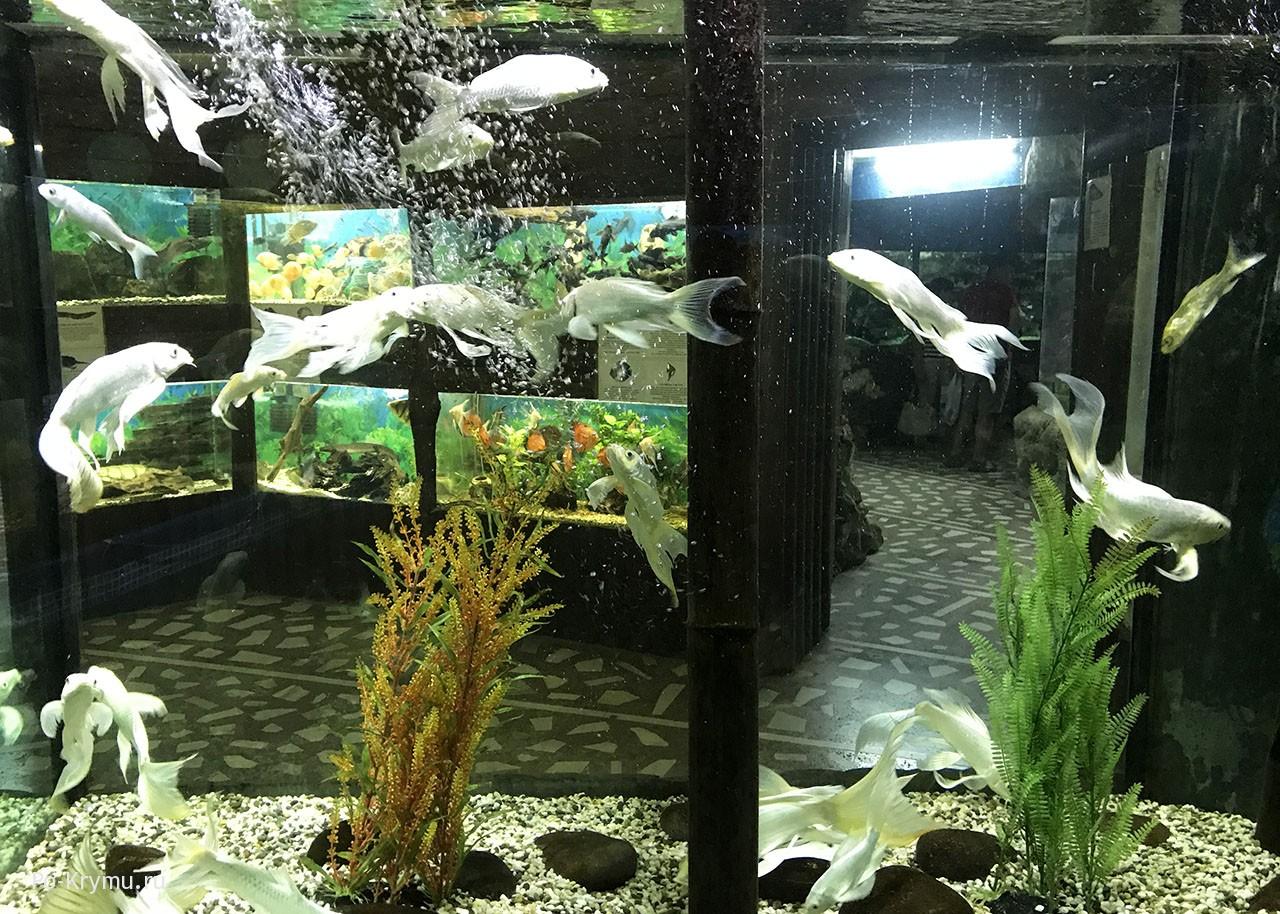 Коллекция рыб в Алуште.