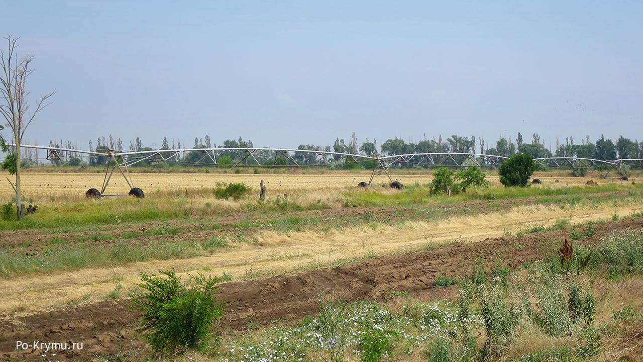 Поля пустили под зерновые, не нуждающиеся в поливе.