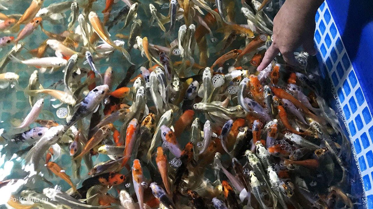 Рыбки в открытом бассейне.