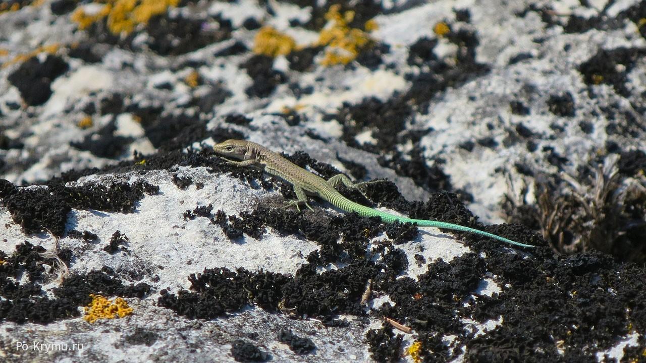 Разноцветные ящерицы на скалах