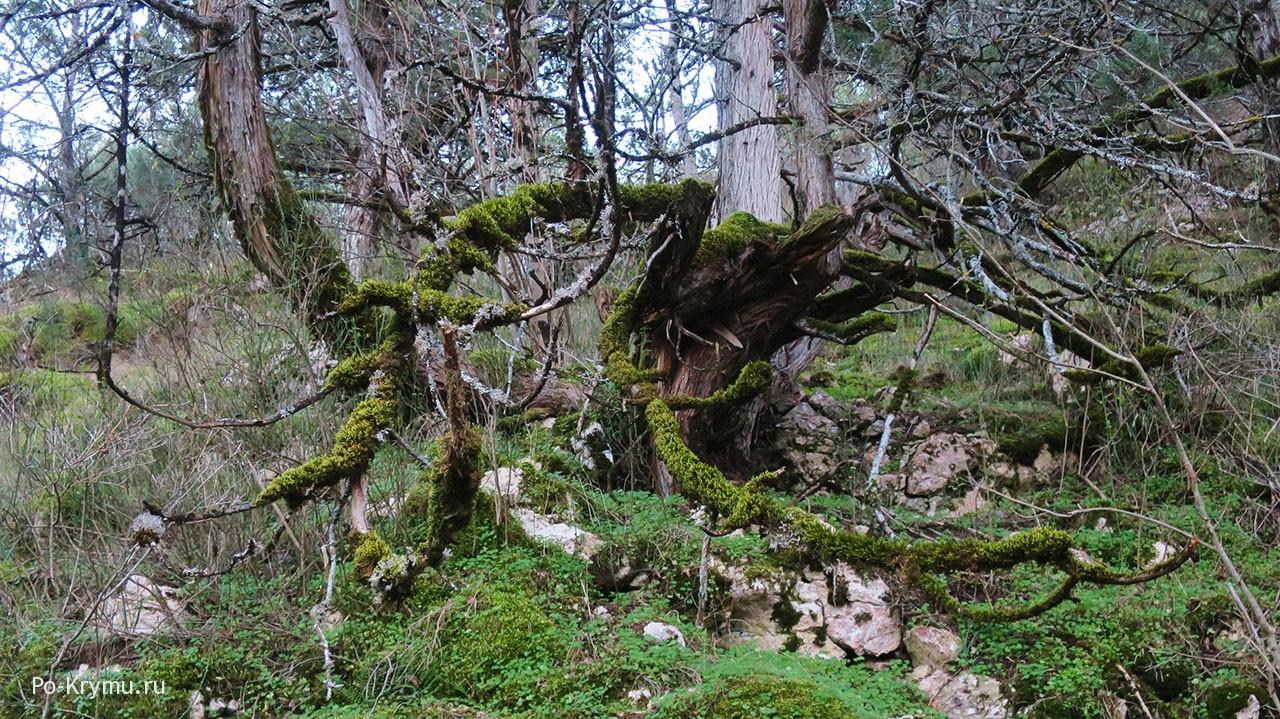 Природные достопримечательности и редкие растения