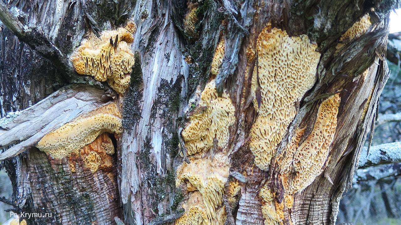Царство живой природы, объединяющее эукариотические организмы
