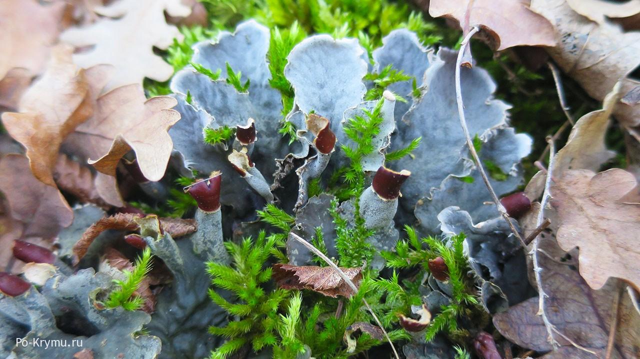 Симбиотические отношения грибов и водорослей