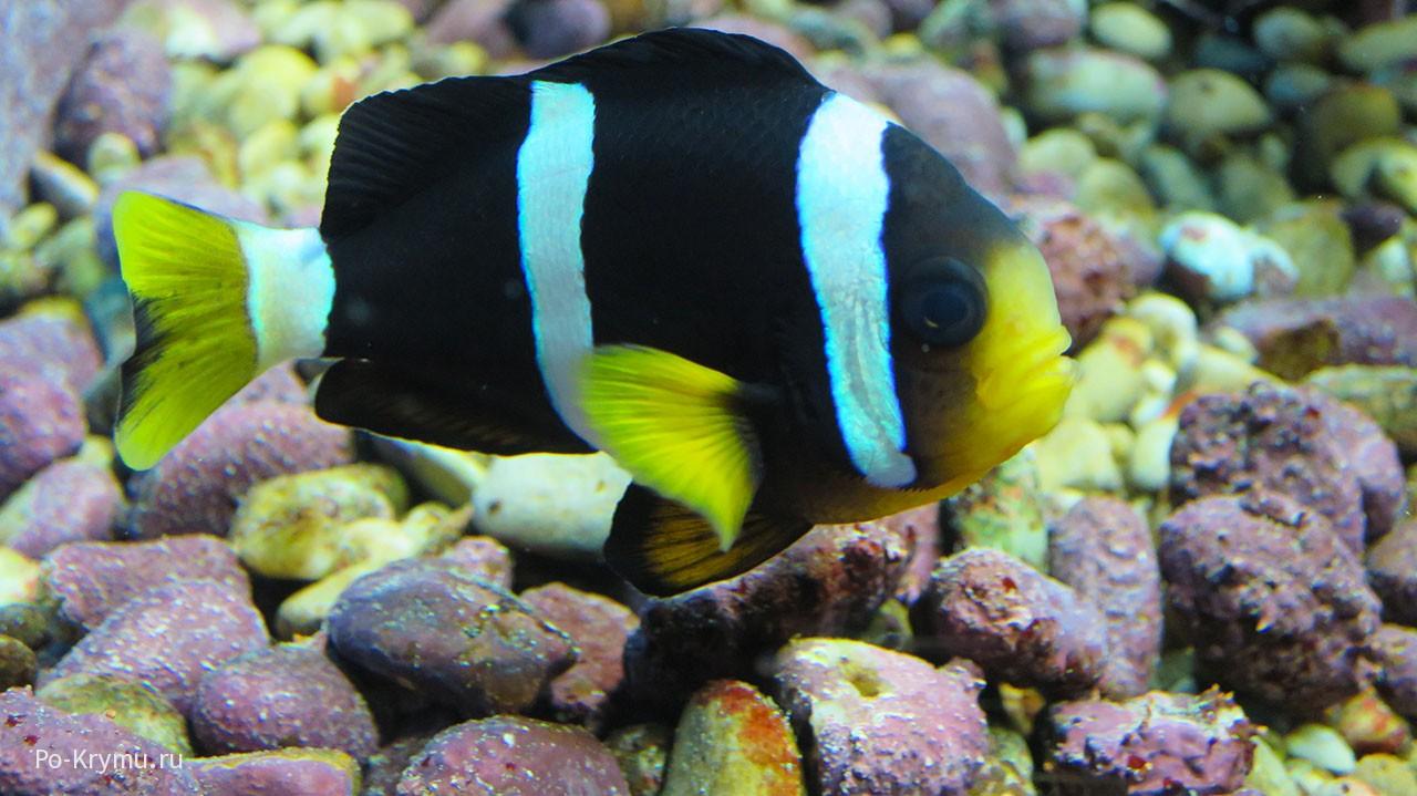 Тропическая рыбка.