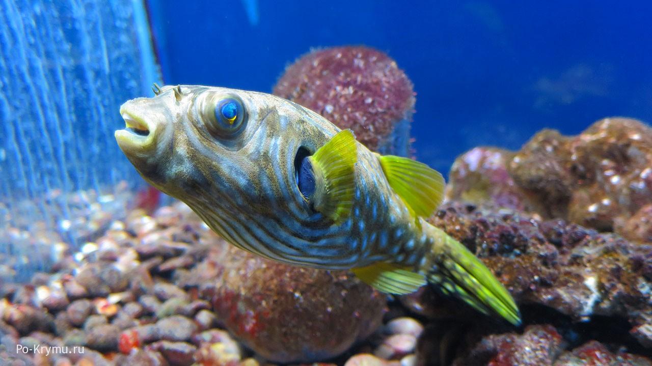 Яркие рыбки за стеклом.