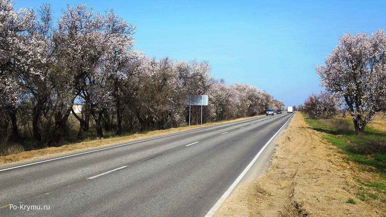 Одна из особенностей Крыма - миндальные лесополосы.