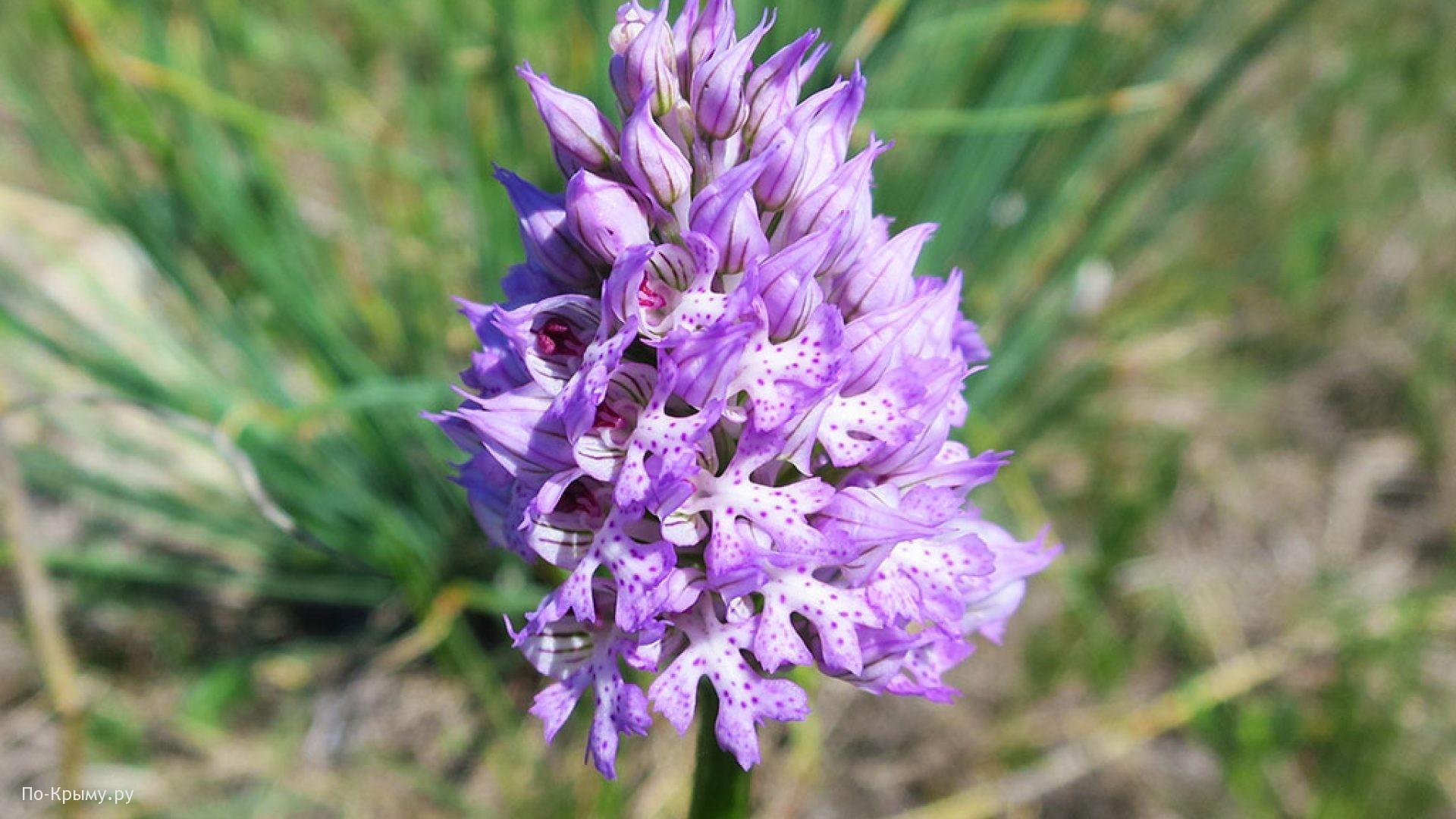 Орхидеи на Белой скале