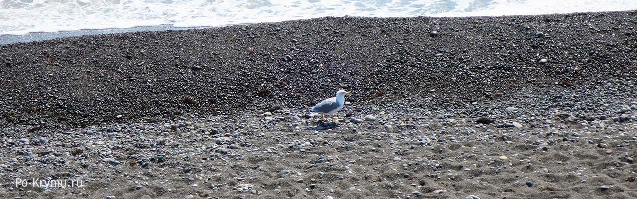 Галечный берег ЮБК - курорт Морское
