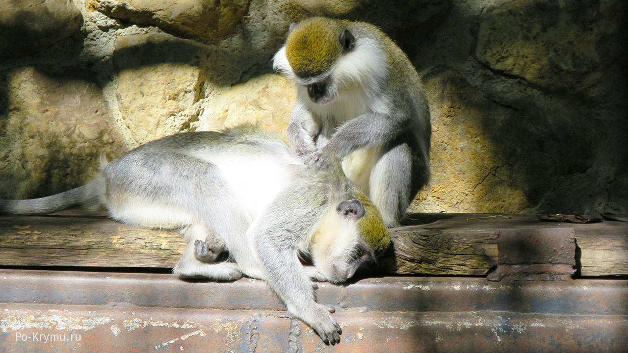 Ялтинский зоопарк Сказка.