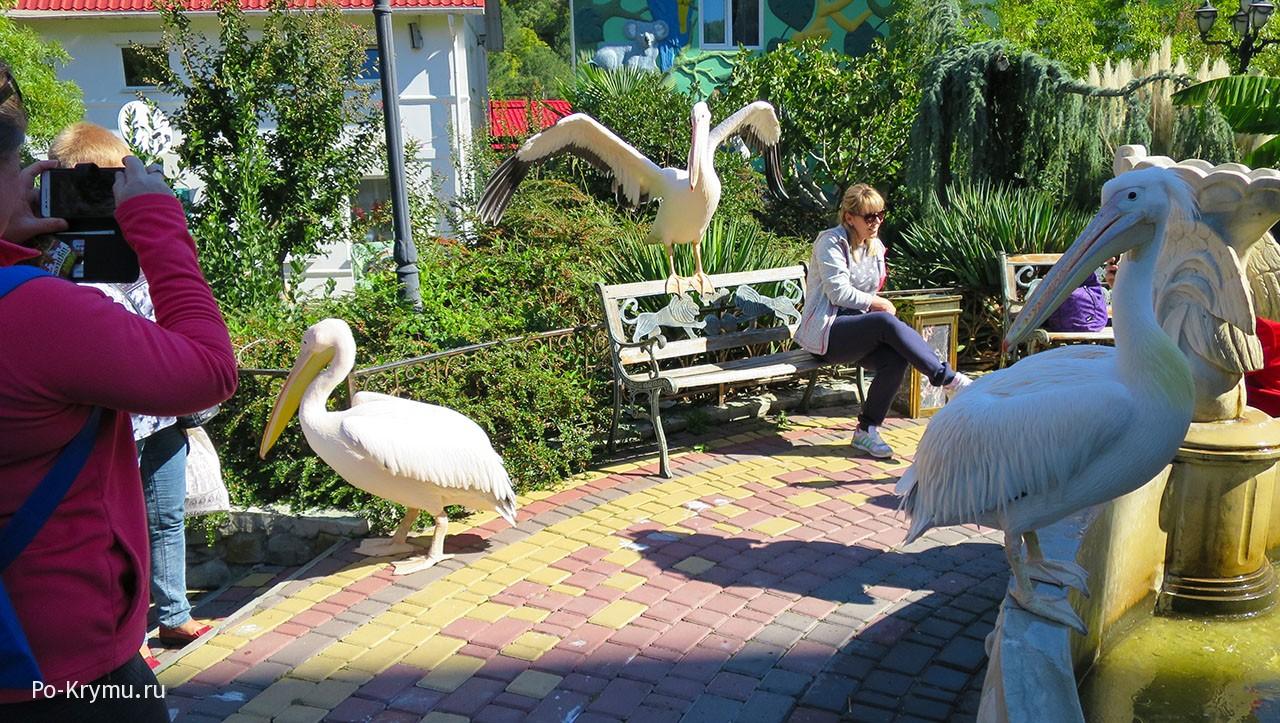 Фотосессия с пеликанами.